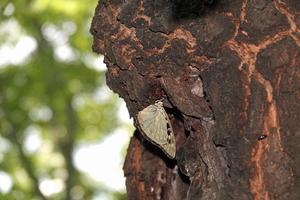 05_200702111 X800 ◎武蔵嵐山 RX10M4.jpg