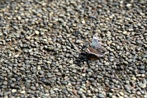 020_201006101 X800 舞岡公園 D750 TAMRON 35-150.jpg