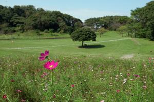 022_201013098 X800 〇観音崎公園 ACQUAMARE RX10M4.jpg