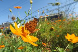 012_200930002 X800 明神台公園 D7X.jpg