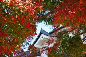 201126522_121 X800 〇彦根城 RX10M4.jpg