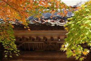 20112642_083 X800 西明寺 RX10M4.jpg
