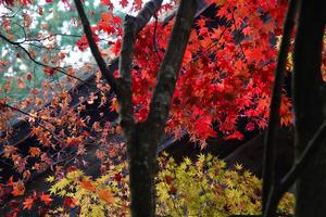 201126260_063 X800 〇金剛輪寺 RX10M4.jpg