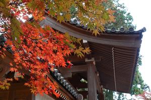 201126357_084 X800 西明寺 RX10M4.jpg