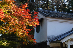 201127841_213 X800 〇西教寺 RX10M4.jpg