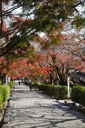 201127885_220 X800 〇西教寺 RX10M4.jpg