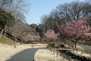 210221028_002 保土ヶ谷公園 20度 RX10M4.jpg