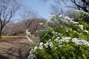 210316017_004 X800 舞岡公園 RX10M4.jpg