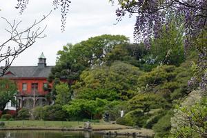 023_210409122 X800 フジ 小石川植物園 RX10M4.jpg