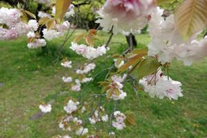 019_210409108 X800 小石川植物園 RX10M4.jpg