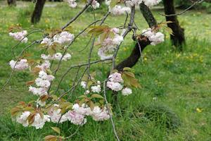 020_210409113 X800 小石川植物園 RX10M4.jpg