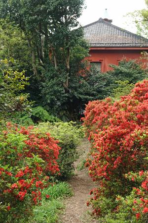 031_210409167 X800 日本庭園上 小石川植物園 RX10M4.jpg