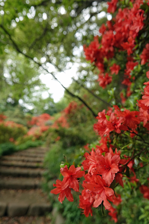030_210409165 X800 日本庭園上 小石川植物園 RX10M4.jpg