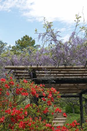 026_210409147 X800 日本庭園上 小石川植物園 RX10M4.jpg