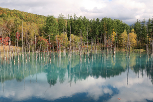 043_211008067 X800 美瑛 青い池 北海道旅行 D7X.jpg