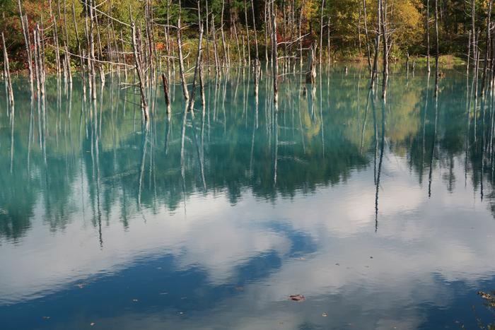 000_211008075 X700 美瑛 青い池 北海道旅行 D7X.jpg