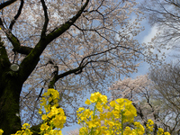 津久井湖城山公園;クリックすると大きな写真になります