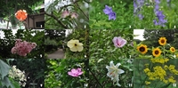舞岡公園 夏の花;クリックすると大きな写真になります