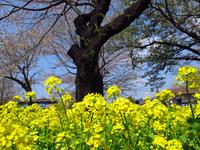 県立津久井湖城山公園;クリックすると大きな写真になります