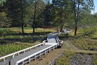 深大寺水生植物園;クリックすると大きな写真になります。