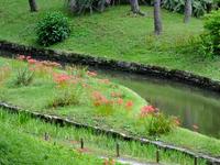 神田上水路;クリックすると大きな写真になります。