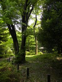 伊勢山自然公園;クリックすると大きな写真になります