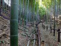 城跡の遺構と竹林;クリックすると大きな写真になります。